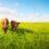 Grass-fed proteiny – nová laťka kvality mezi proteiny
