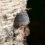 Adaptogenní houby – neobjevená síla přírody, díl. 1 – Chaga