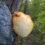 Adaptogenní houby – neobjevená síla přírody, díl. 4. – Hericium