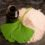 Nootropika jako prostředky pro neurohacking, díl 12. – Ginkgo biloba